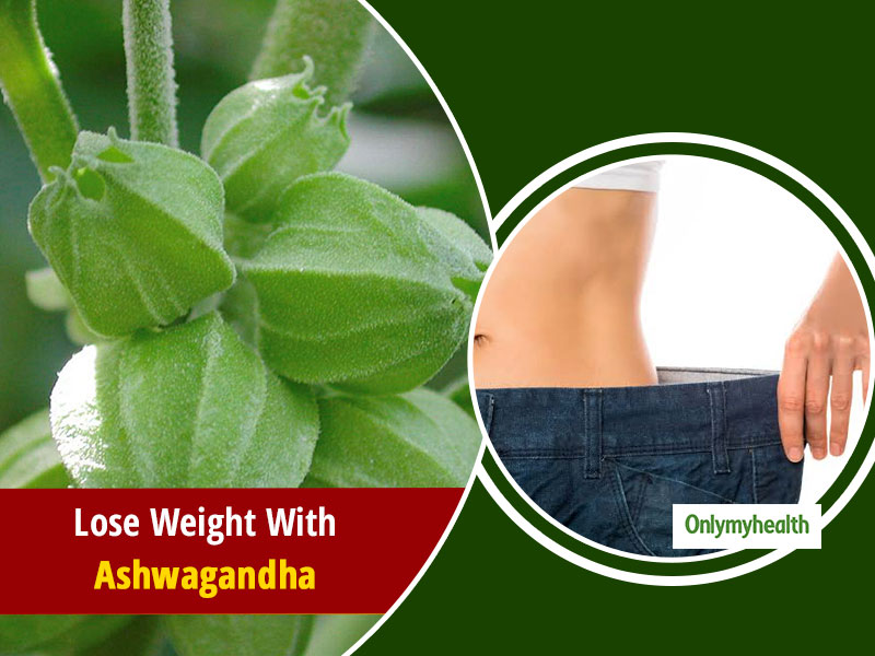 Why Is Ashwagandha Used For Weight Loss? Know Its Health Benefits And Much More